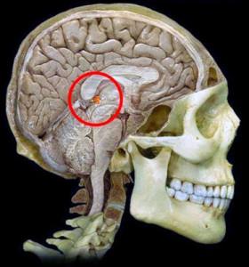 ghiandola pineale posizione cervello